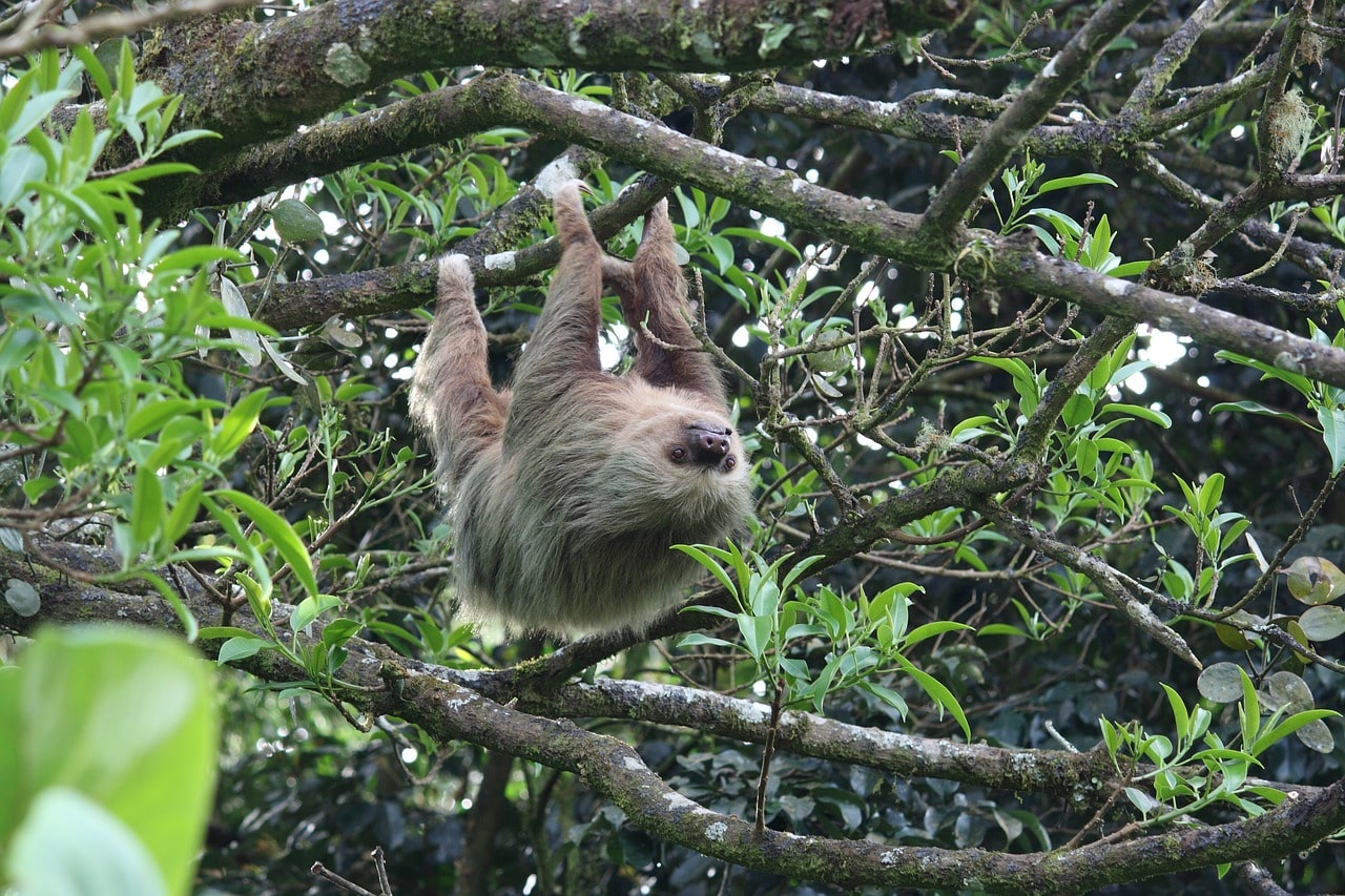 Отговорки ленивца в английском языке