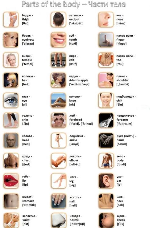 Изображения с частями тела на английском с транскрипцией