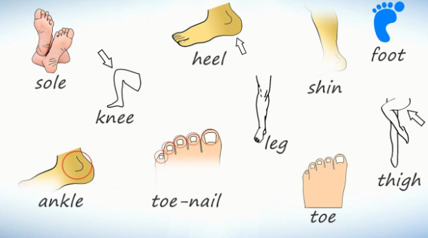 части рук и ног на английском - фото 2